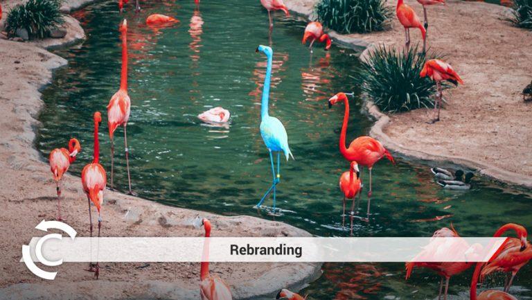 Blog Rebranding